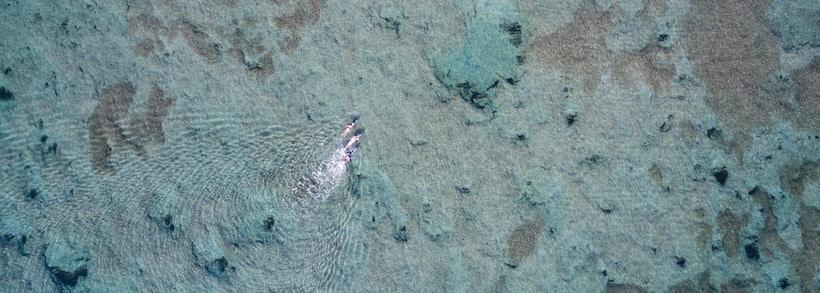 Aerial view of people swimming in the ocean