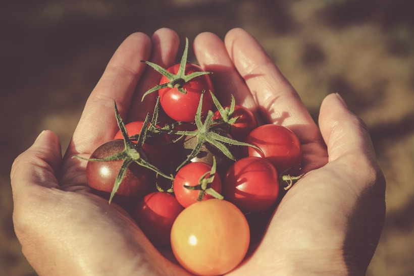 Person with hands outstretched and tomatoes in hand