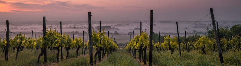 Dusk over a vineyard with clouds