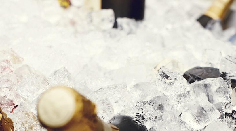 Wine bottles under ice in a cooler