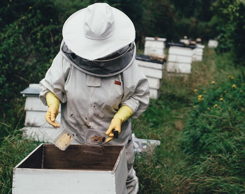 A beekeeper in a suit tends to a nest