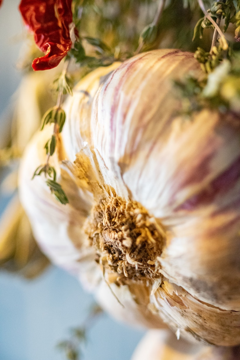 Bottom of fresh garlic, unpeeled