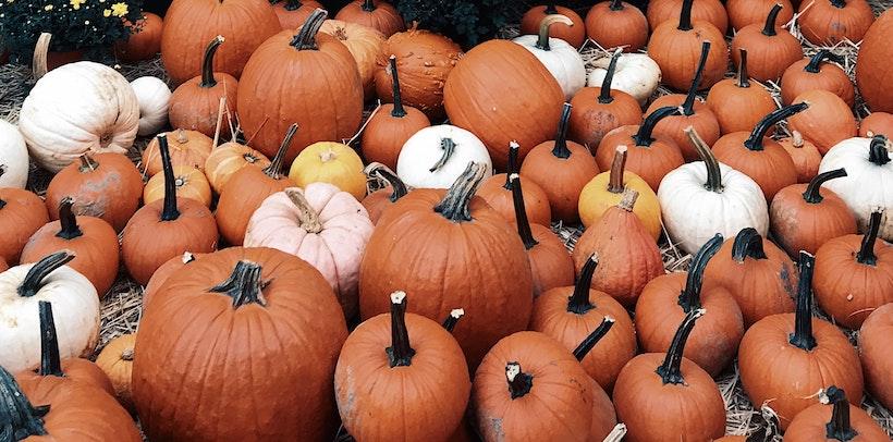 Mixed Pumpkins on Ground