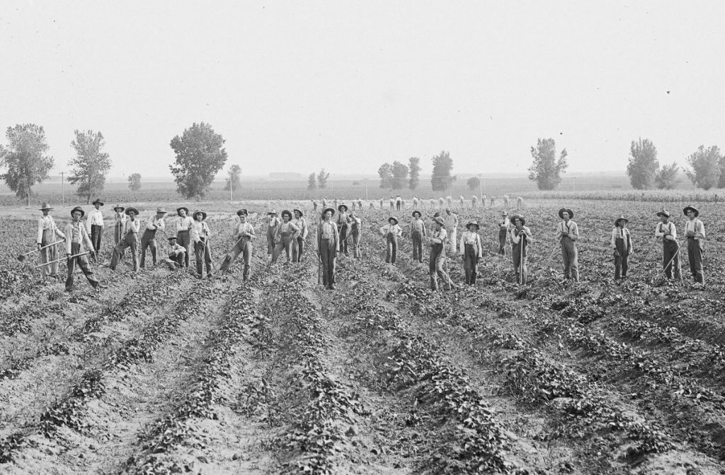 Boys working the sweet potato fields in Kearney, Nebraska